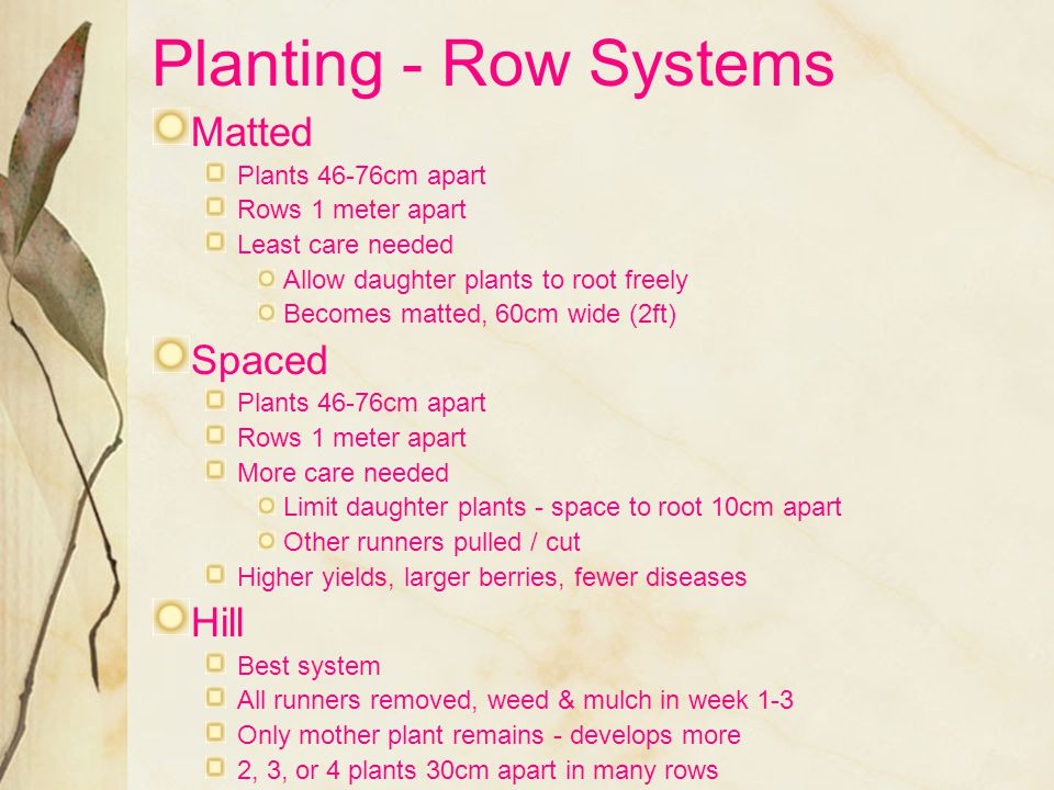 Planting - Row Systems Matted Spaced Hill Plants 46-76cm apart