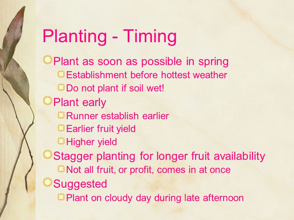 Planting - Timing Plant as soon as possible in spring Plant early