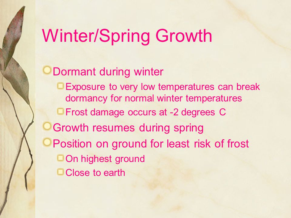 Winter/Spring Growth Dormant during winter