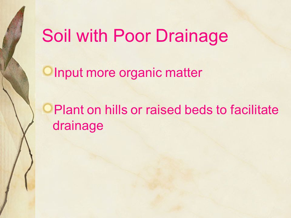Soil with Poor Drainage