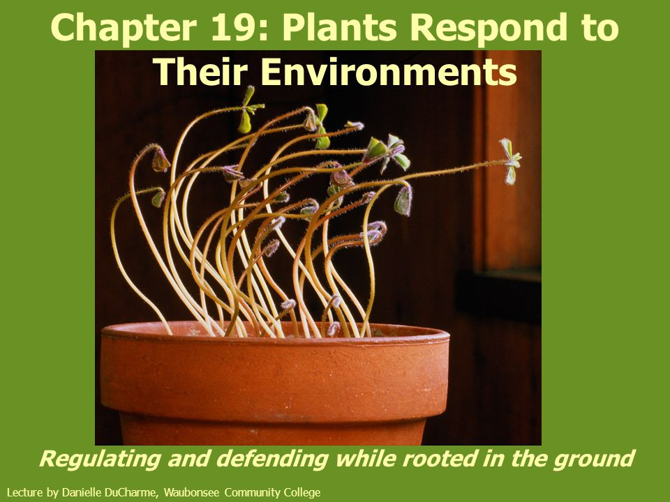 Chapter 19: Plants Respond to Their Environments