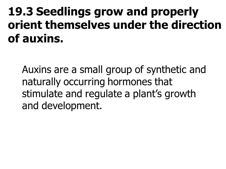 19.3 Seedlings grow and properly orient themselves under the direction of auxins.