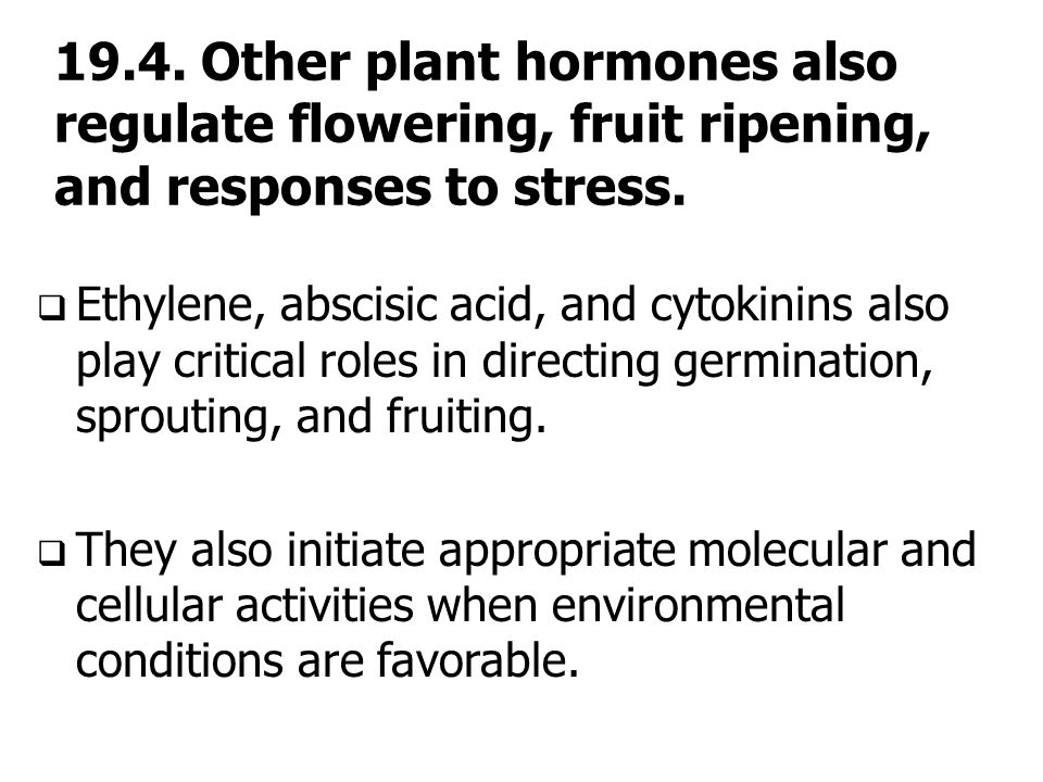 19.4. Other plant hormones also regulate flowering, fruit ripening, and responses to stress.