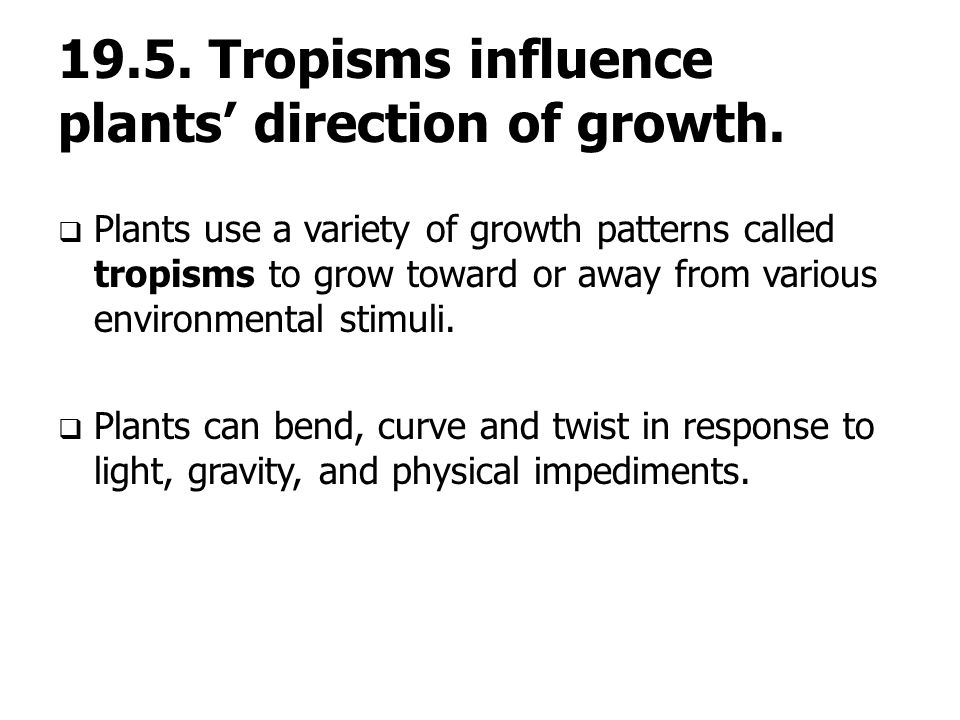 19.5. Tropisms influence plants' direction of growth.