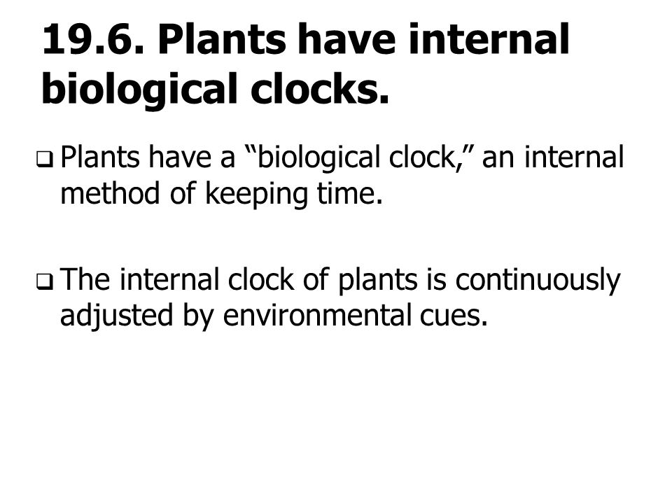biological clock in plants pdf