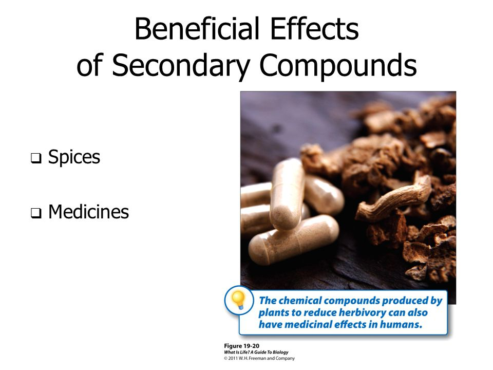 Beneficial Effects of Secondary Compounds