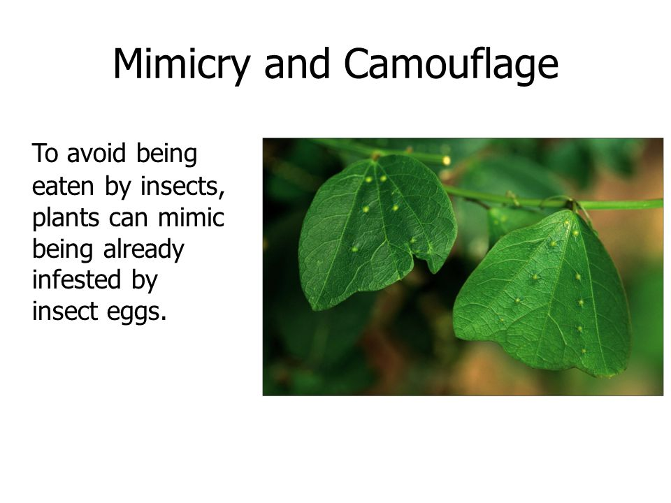 Mimicry and Camouflage