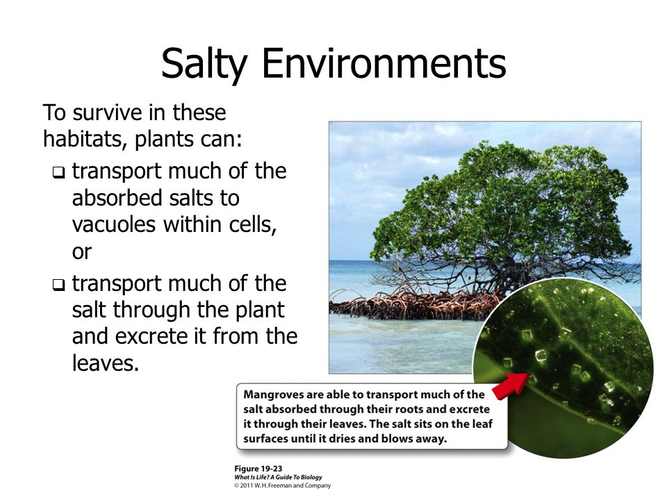 Salty Environments To survive in these habitats, plants can: