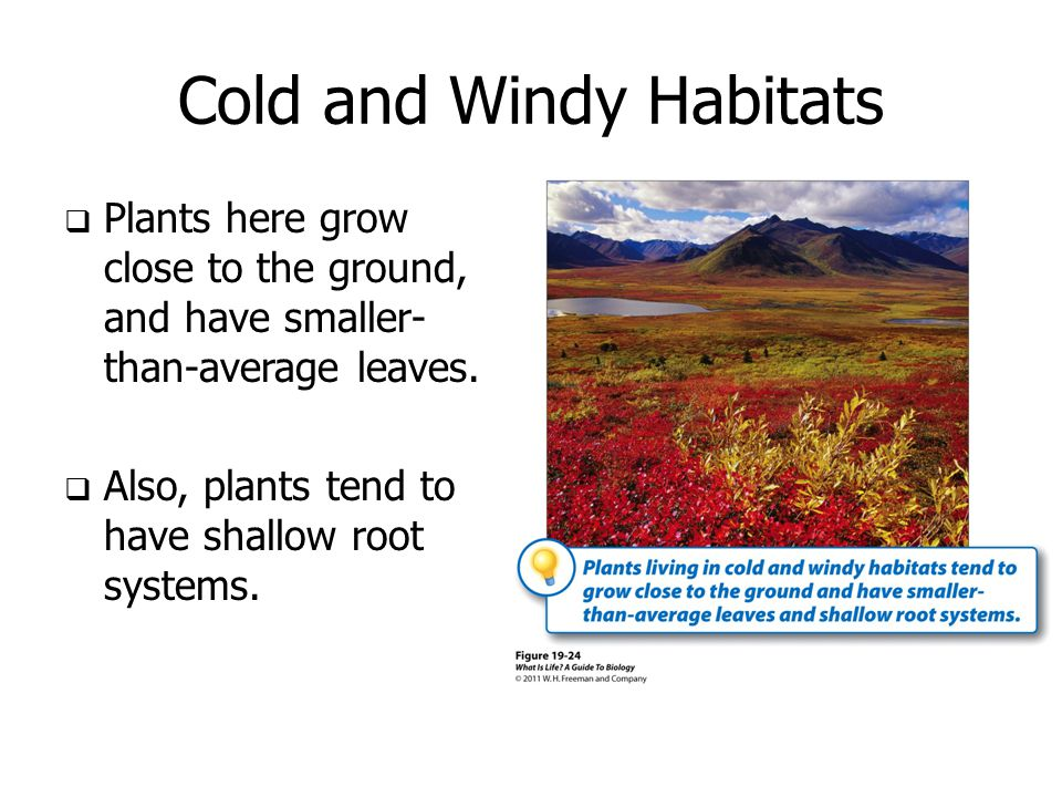 Cold and Windy Habitats