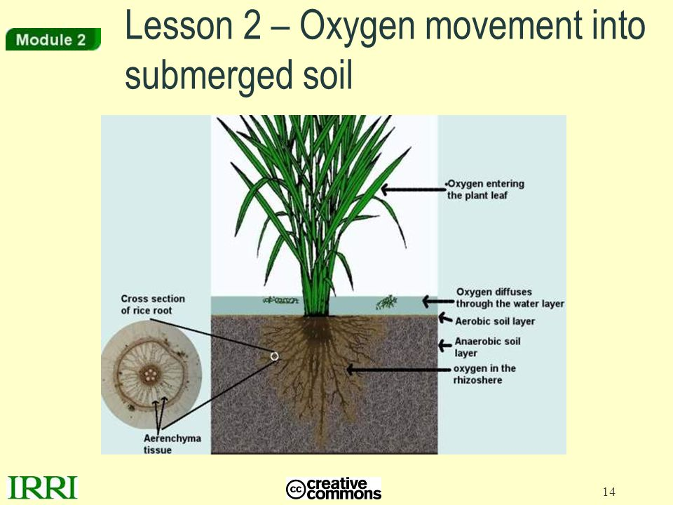 Lesson 2 – Oxygen movement into submerged soil