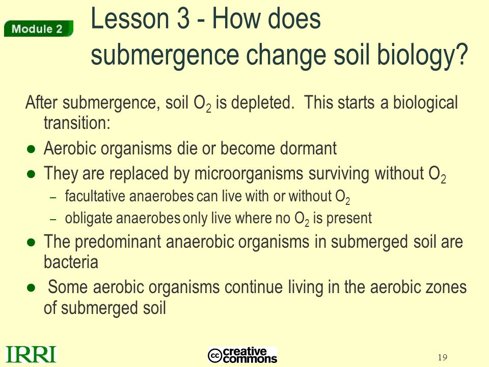 Lesson 3 - How does submergence change soil biology
