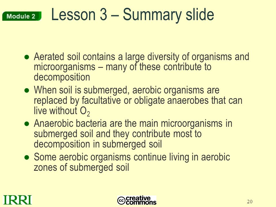 Lesson 3 – Summary slide Aerated soil contains a large diversity of organisms and microorganisms – many of these contribute to decomposition.