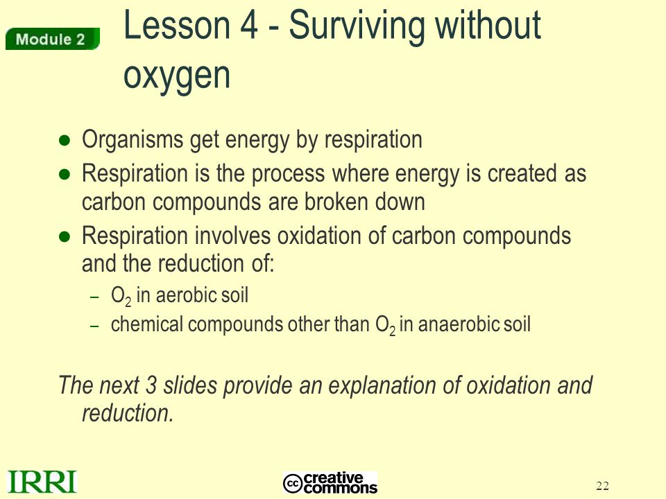 Lesson 4 - Surviving without oxygen