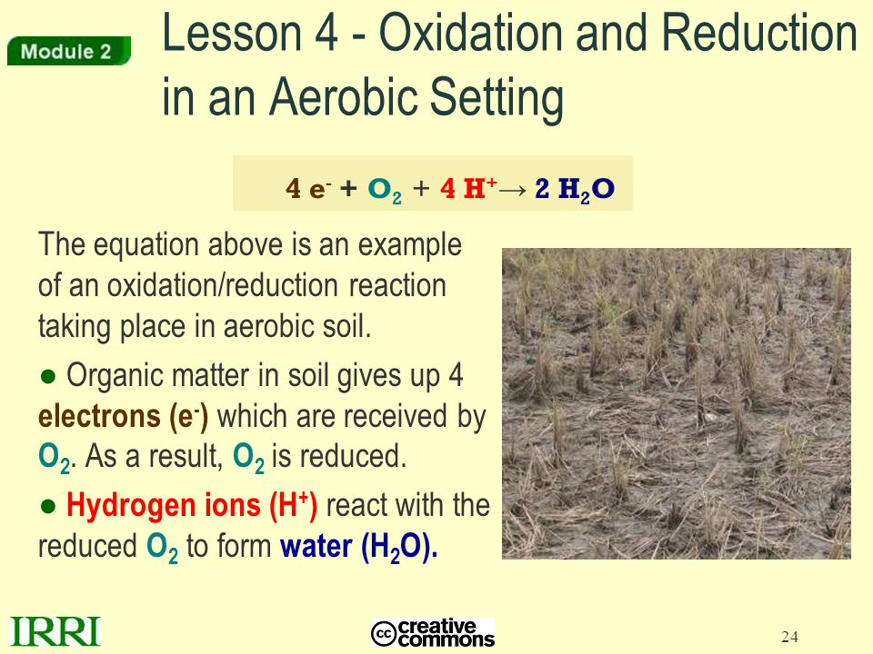 Lesson 4 - Oxidation and Reduction in an Aerobic Setting