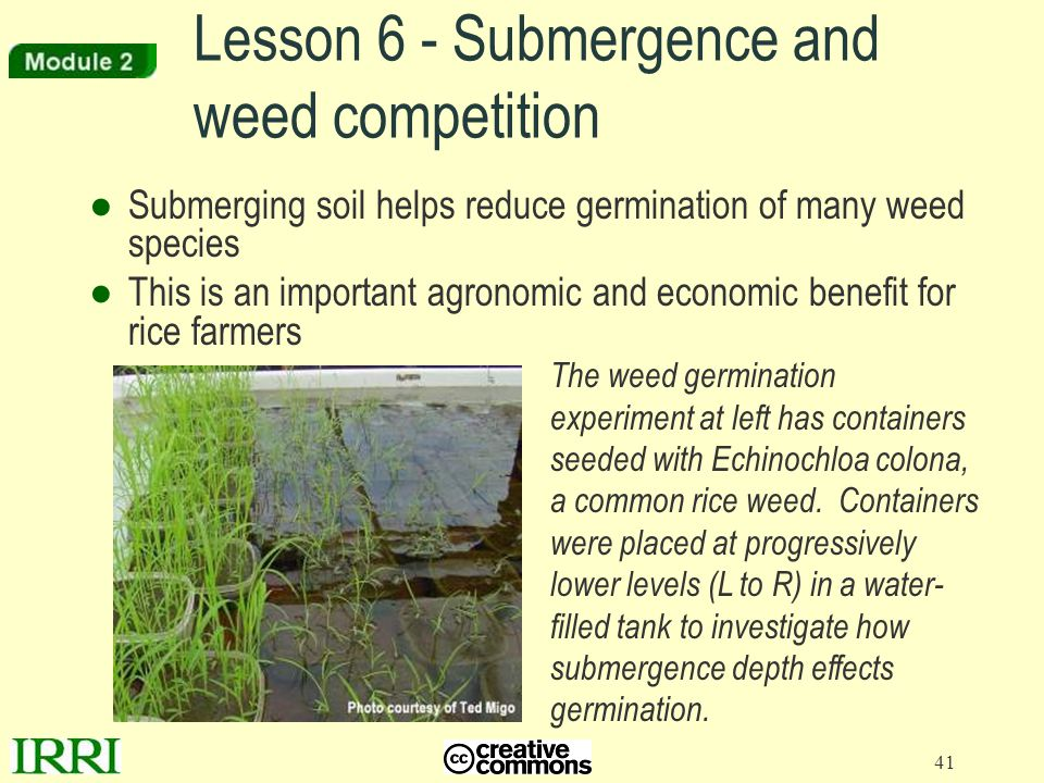 Lesson 6 - Submergence and weed competition