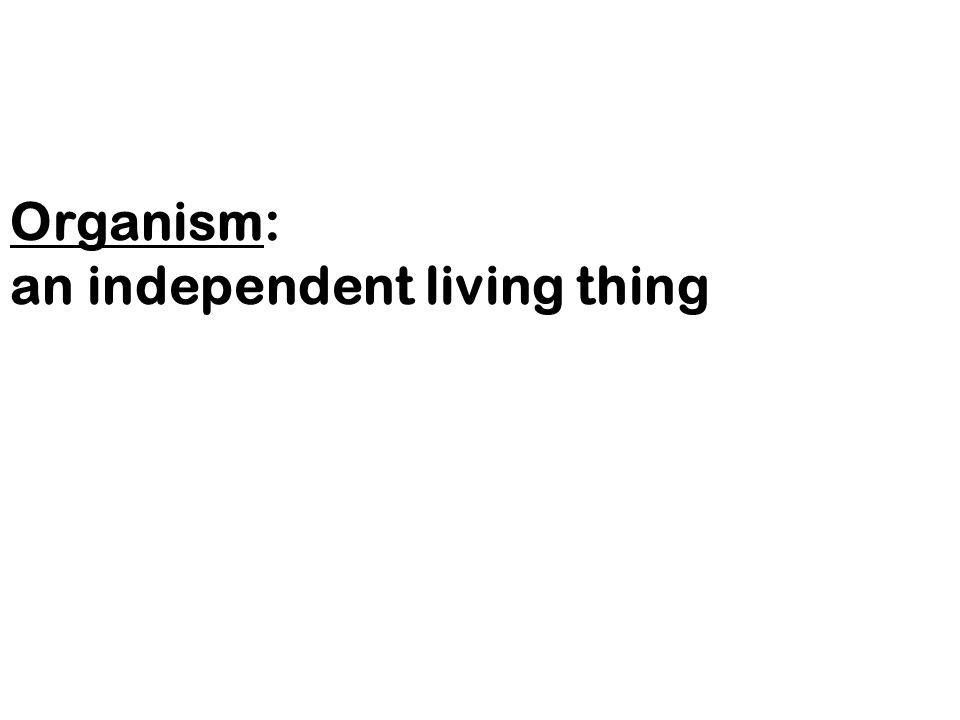 Organism: an independent living thing