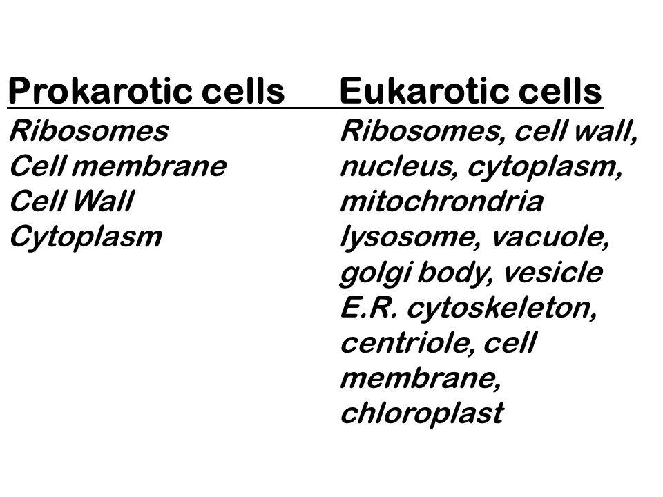 Prokarotic cells. Eukarotic cells Ribosomes
