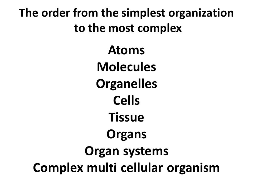 The order from the simplest organization to the most complex