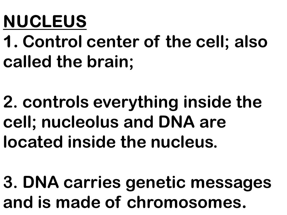 NUCLEUS 1. Control center of the cell; also called the brain; 2
