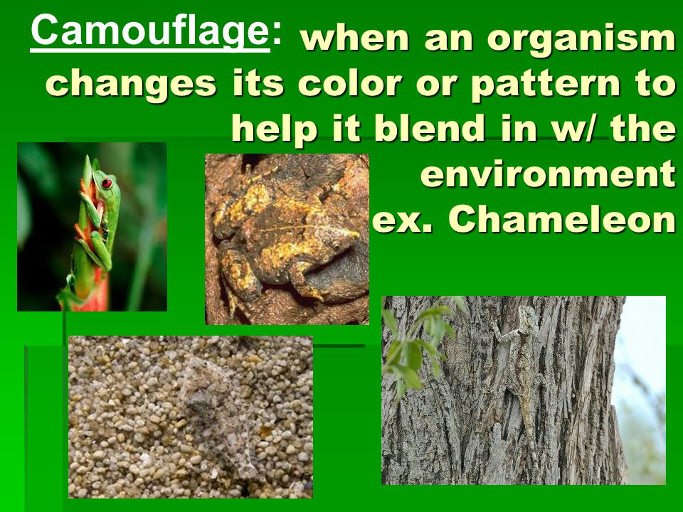 Camouflage: when an organism changes its color or pattern to help it blend in w/ the environment ex.
