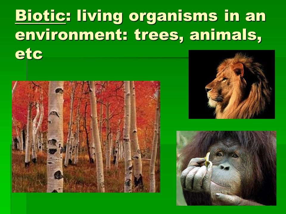 Biotic: living organisms in an environment: trees, animals, etc