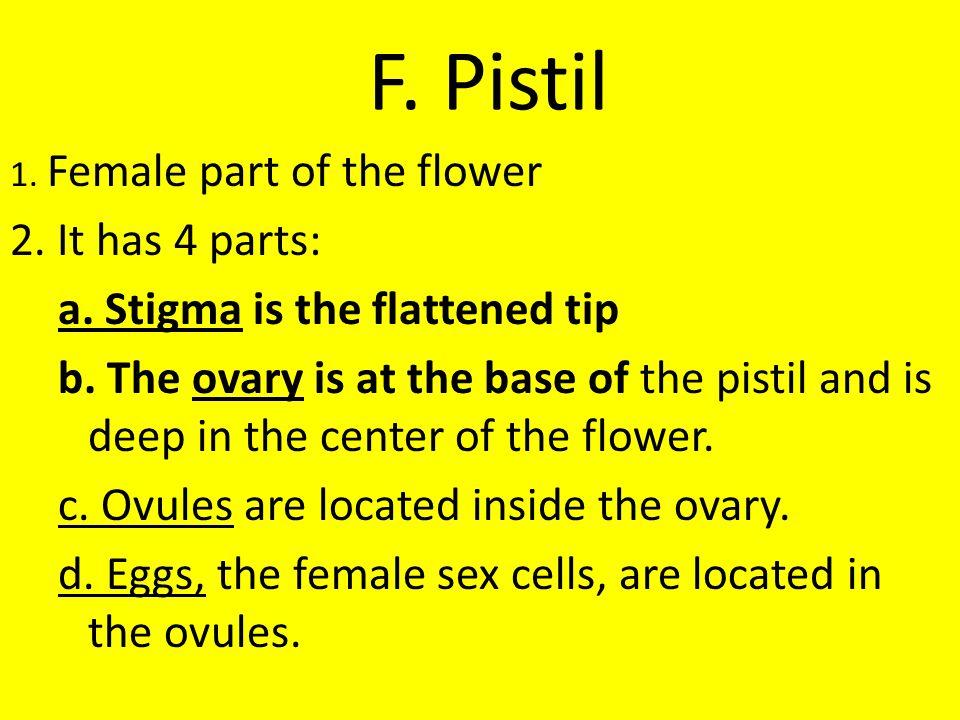 F. Pistil 2. It has 4 parts: a. Stigma is the flattened tip