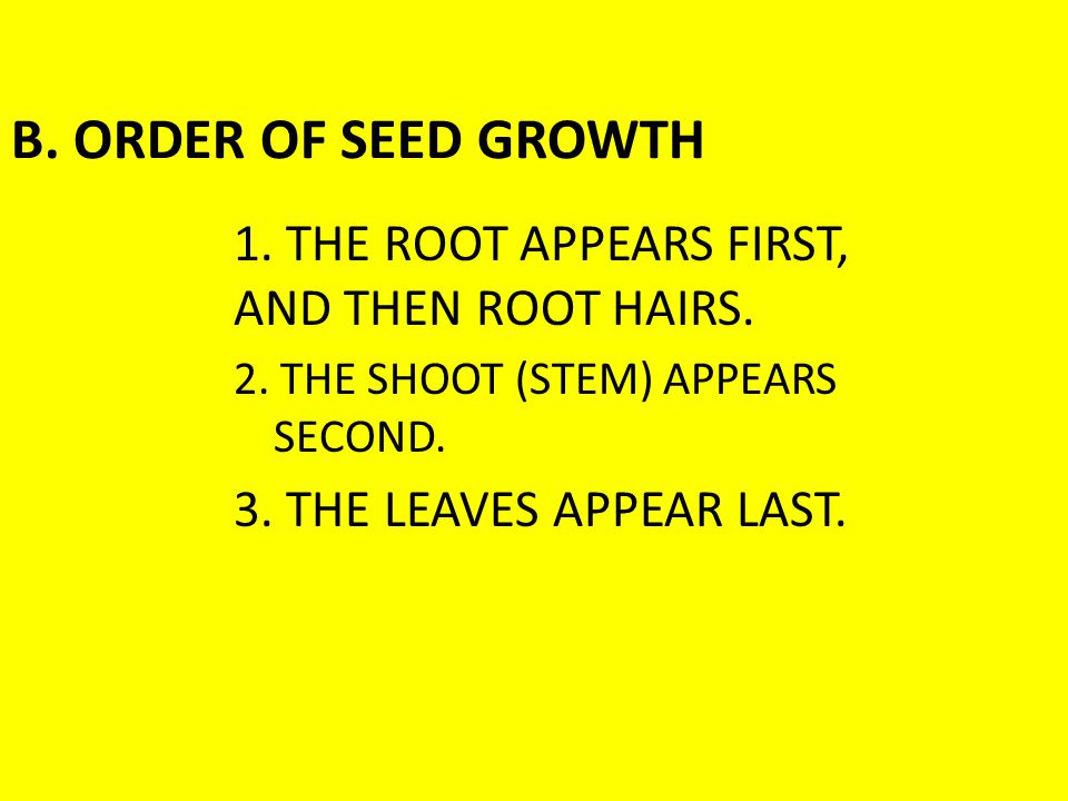 B. ORDER OF SEED GROWTH 1. THE ROOT APPEARS FIRST,