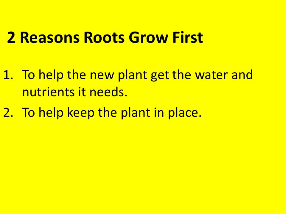 2 Reasons Roots Grow First