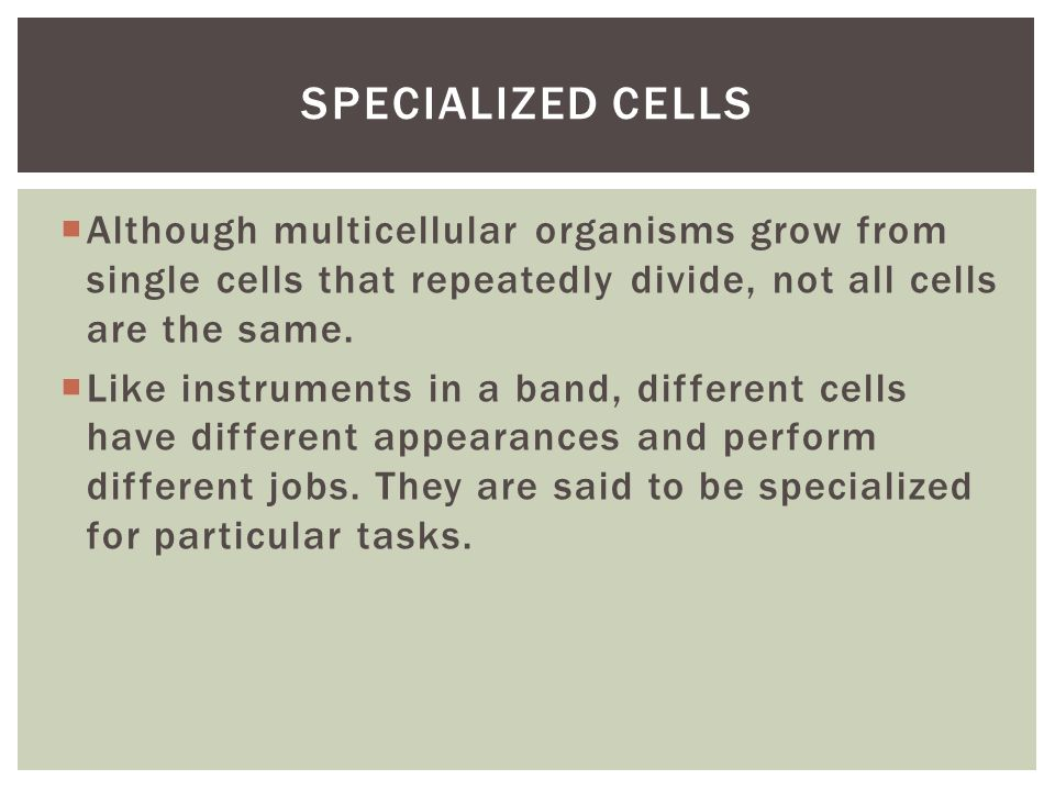 Specialized cells Although multicellular organisms grow from single cells that repeatedly divide, not all cells are the same.