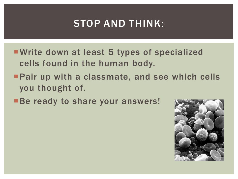 Stop and Think: Write down at least 5 types of specialized cells found in the human body.