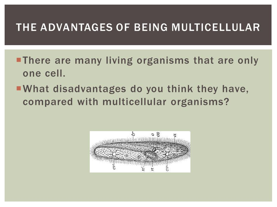 The advantages of being multicellular