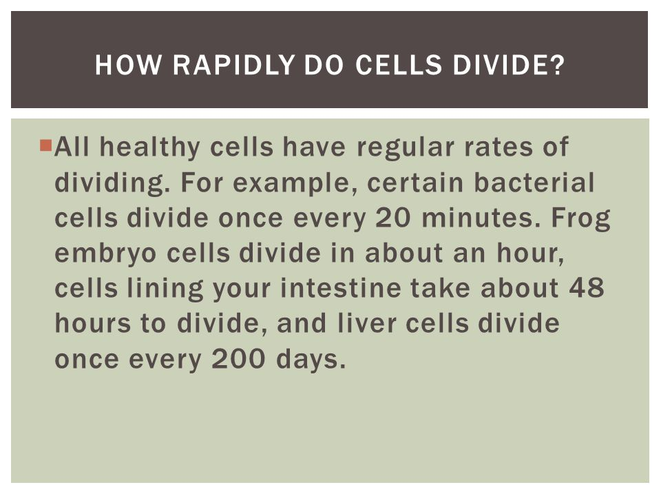 How rapidly do cells divide