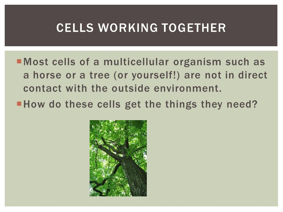 Cells working together