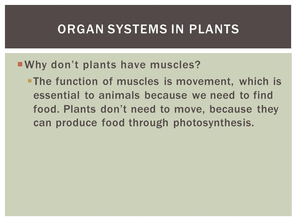 Organ systems in plants