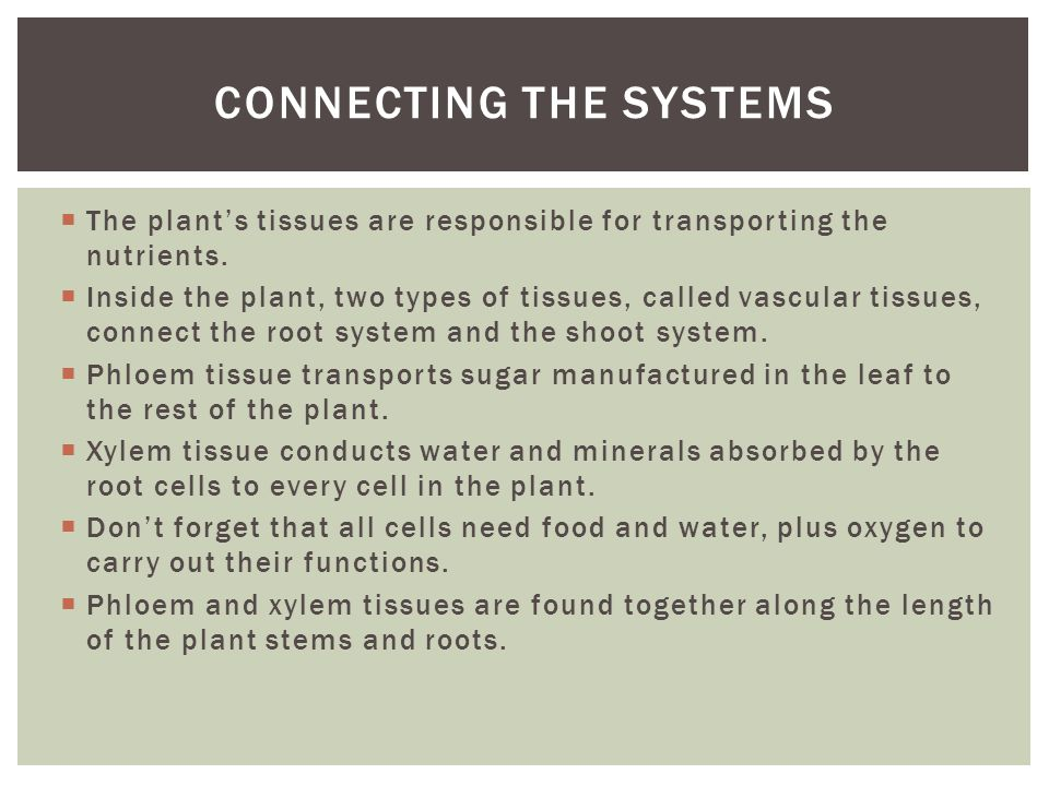 Connecting the systems