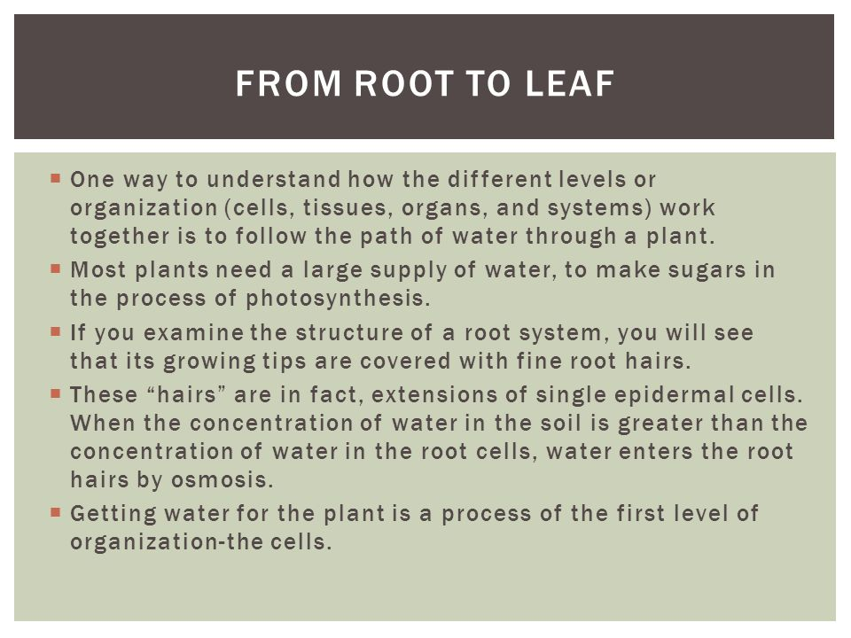 From root to leaf