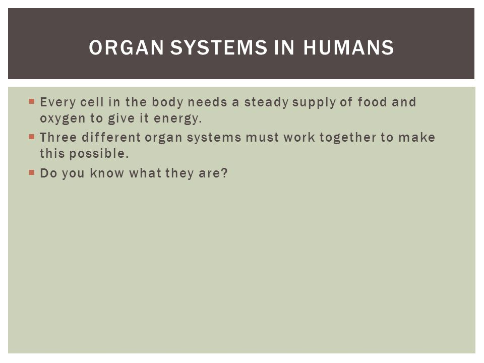 Organ systems in humans