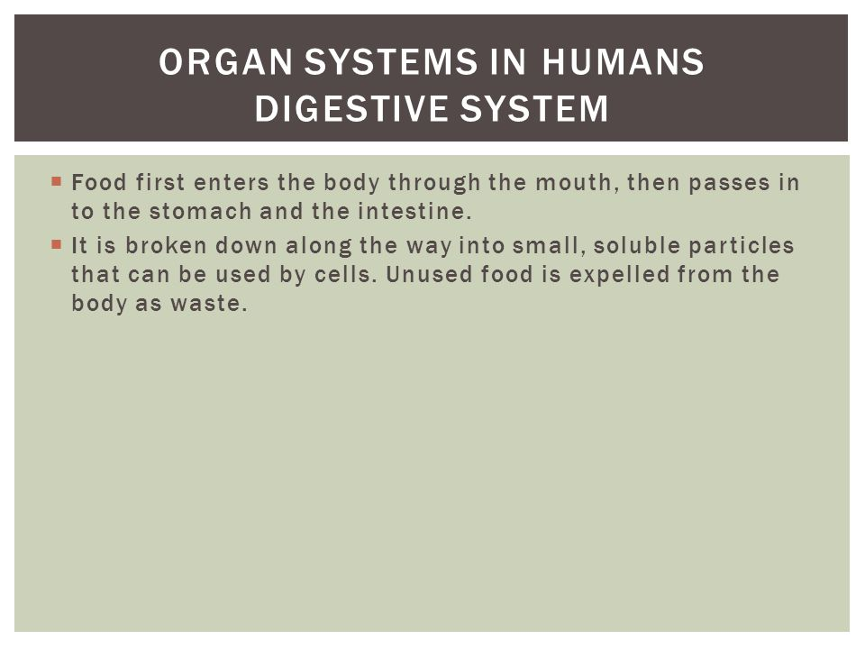 Organ systems in humans digestive system
