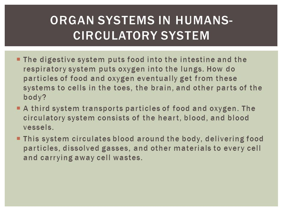 Organ systems in humans- circulatory system