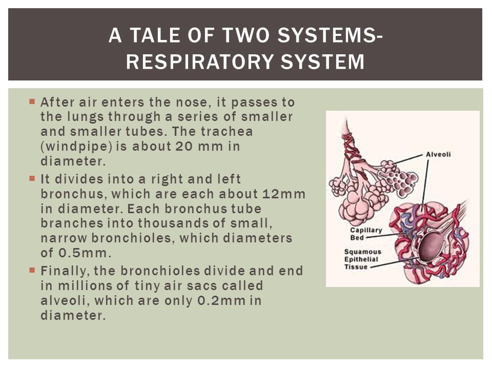 A tale of two systems- respiratory system