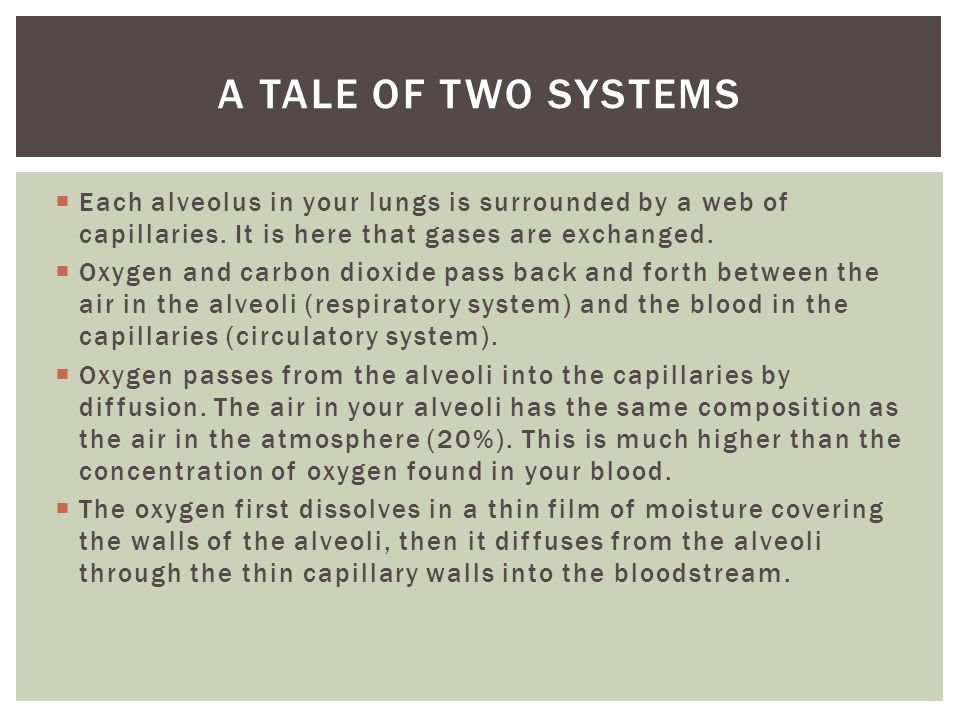 A Tale of two systems Each alveolus in your lungs is surrounded by a web of capillaries. It is here that gases are exchanged.