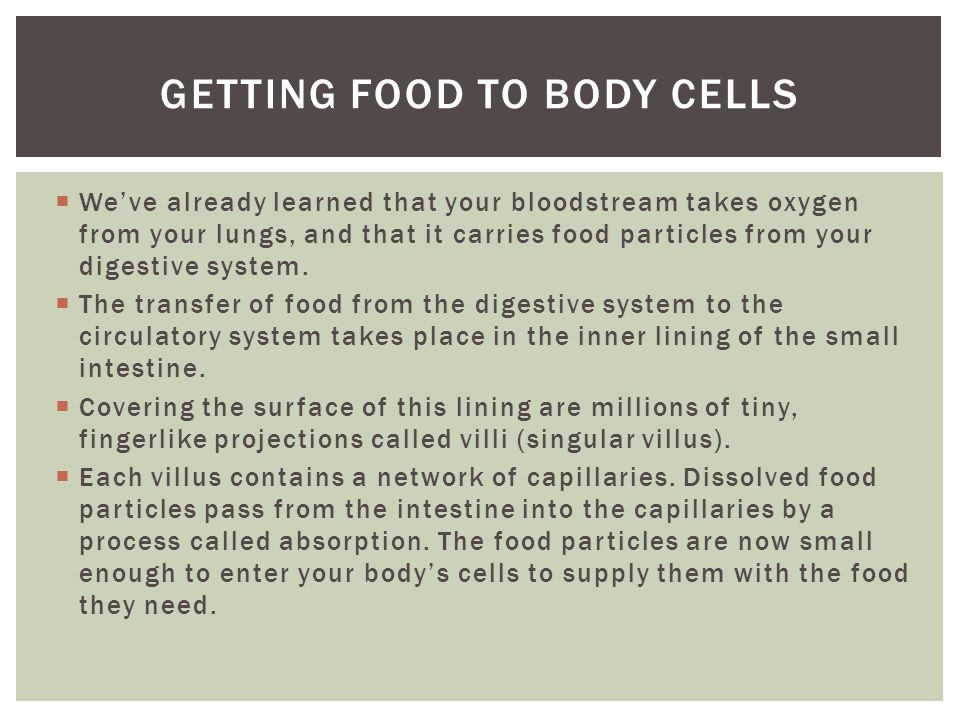 Getting food to body cells