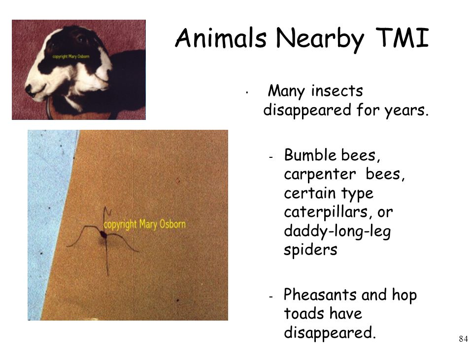 Animals Nearby TMI Many insects disappeared for years.