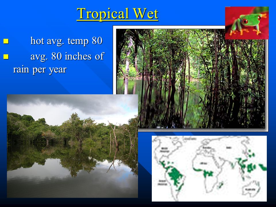 Tropical Wet hot avg. temp 80 avg. 80 inches of rain per year