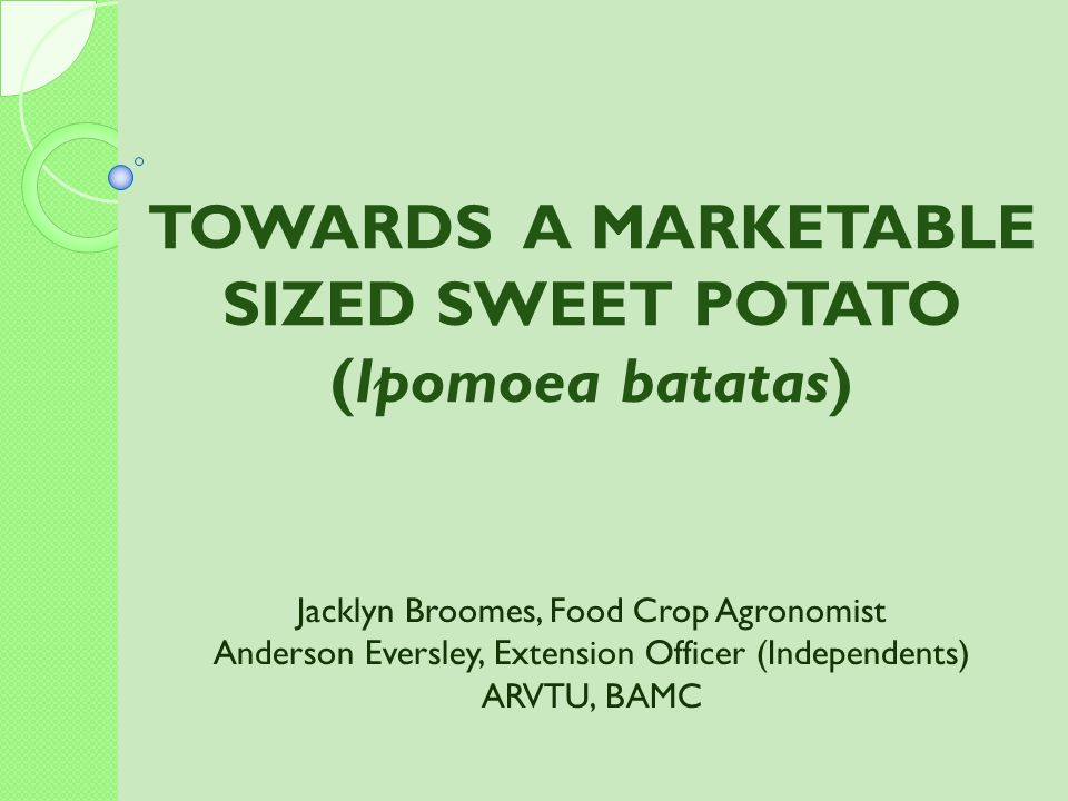 TOWARDS A MARKETABLE SIZED SWEET POTATO (Ipomoea batatas)