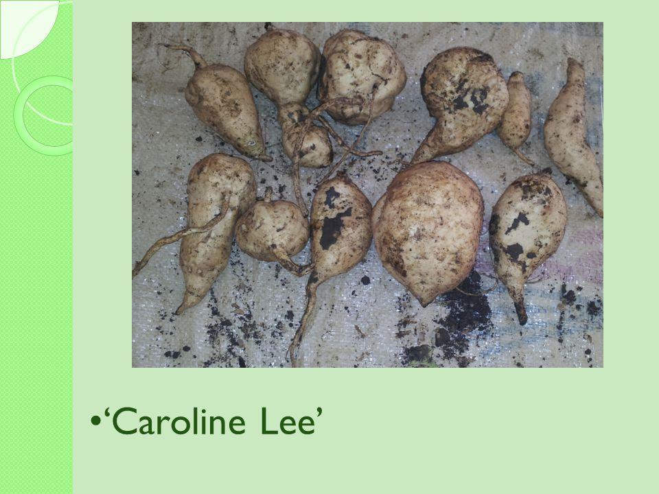 'Caroline Lee'