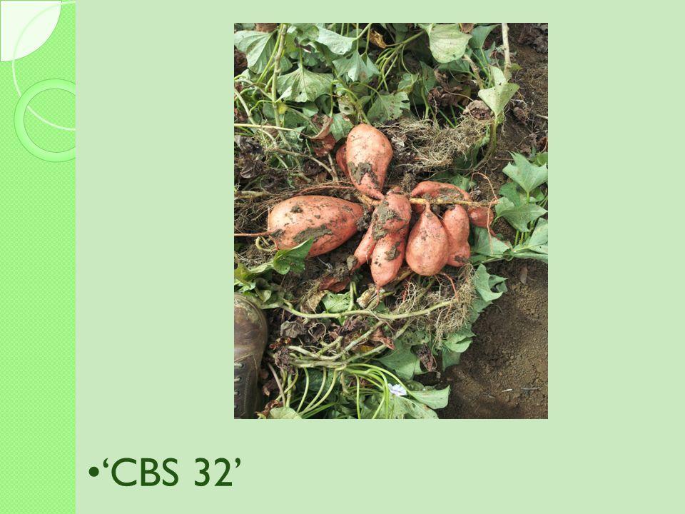 'CBS 32'