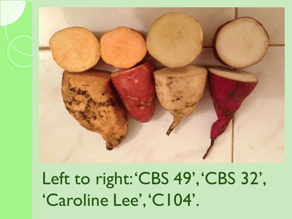 Left to right: 'CBS 49', 'CBS 32', 'Caroline Lee', 'C104'.