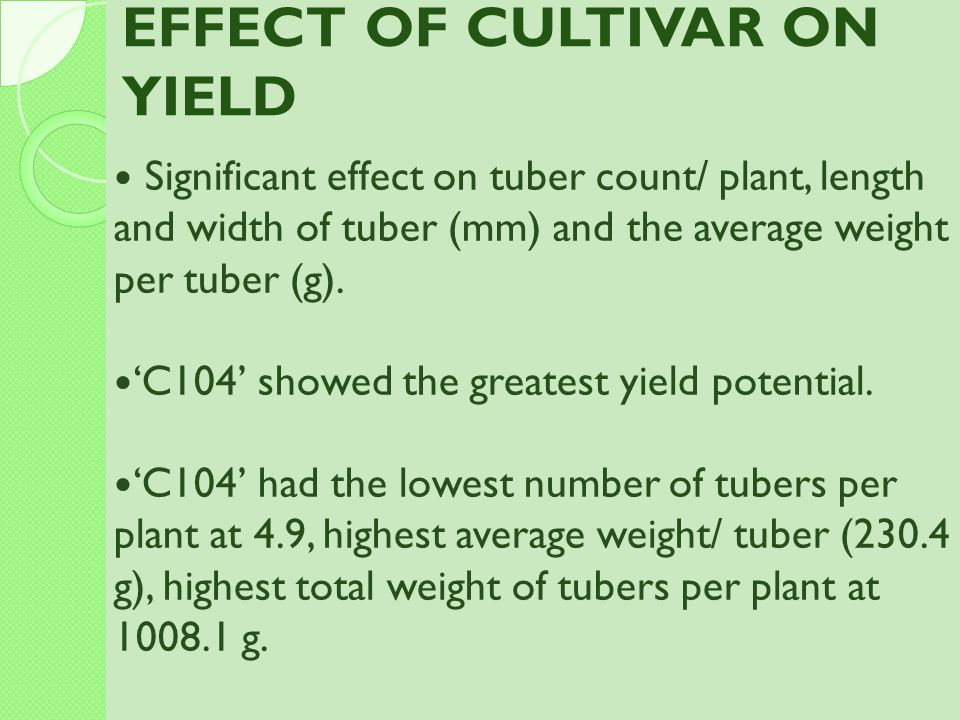 EFFECT OF CULTIVAR ON YIELD