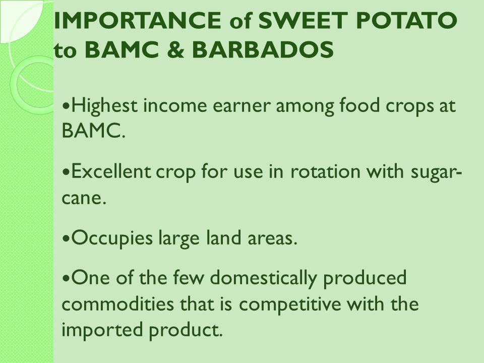 IMPORTANCE of SWEET POTATO to BAMC & BARBADOS